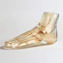 Quart X-Ray Foot Phantom