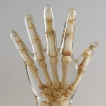 Quart X-Ray Hand Phantom